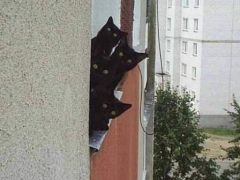 4_chats_noirs_http://wamiz.com/chiens/diaporama/chiens-et-chats-photos-droles-lolcats-2175/photo-2.html