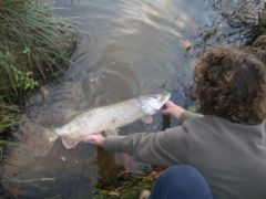 Brochet_Landes_http://fishingteam-crevard.over-blog.com/article-brochet-turc-40485874.html